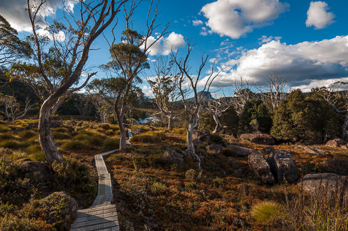 The Overland Track leads on narrow planks through amazingly picturesque country. Luckily, the weather was sunny and reasonably warm most of the days.