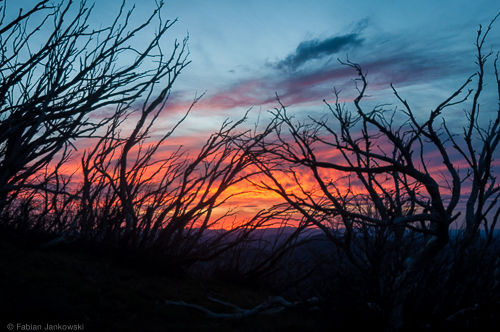 Sunset as seen through the trees in the Victorian high country in Australia.
